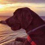 Foto del profilo di Tatjana