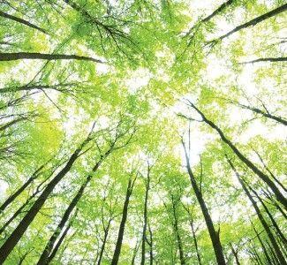 Foto Turismo sostenibile e Hotel Green Marketing… quando una corretta gestione ambientale fa bene al portafoglio!